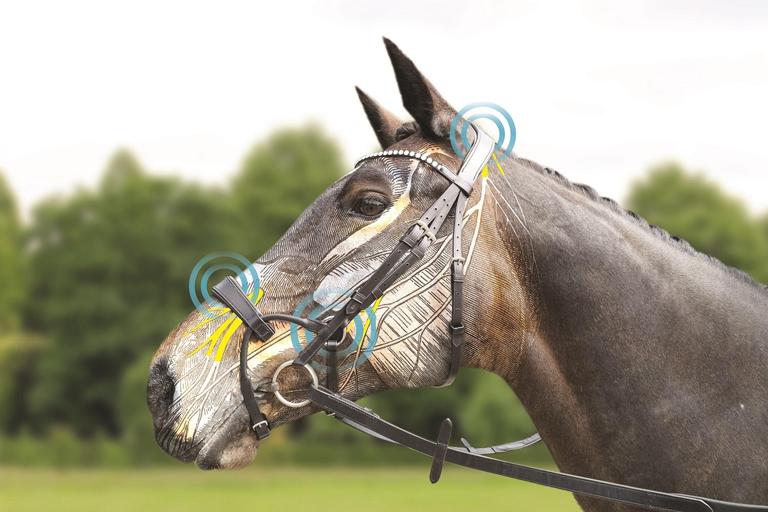 Bridlewear Horse