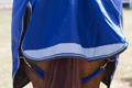 Tail Flap